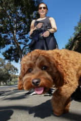 Louise Shostak, with Chichi the cavoodle