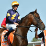 Moroney confirms Alabama for Guineas and sends warning to favourites