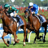 Superstar: Capitalist romps away with the Golden Slipper during his racing career.