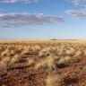 Dinosaur hunters on the trail of Australia's apex predator