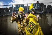 Hear us roar: Richmond die-hards Paul Webb, left, and Bruce Korun state their allegiance at the VFL grand final on Sunday.