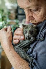 ACT Wildlife flying fox coordinator Denise Kay has nine in her care.