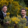 $40m psychedelic medicine institute launches in Melbourne