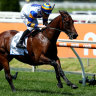 Ambitous plans for Adelaide Ace with Guineas call due by midweek