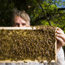 Canberra buzzing as bees begin to swarm