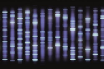 DNA sequencing tells scientists the order of four chemical building blocks that make up a DNA molecule.