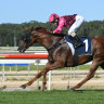 A fairly even track is predicted when NSW Racing returns to Wyong on Sunday.