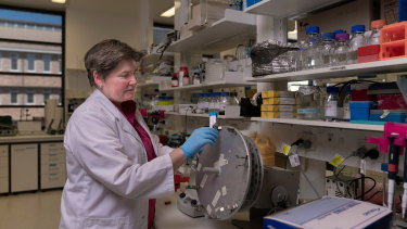 Professor Elizabeth Gardiner at the John Curtin School of Medical Reseach at Australian National University.