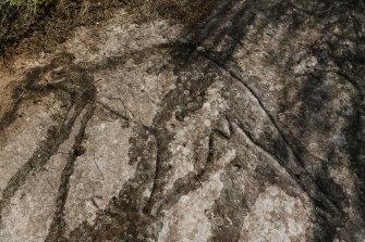 A rock engraving of a kangaroo at Cromer Heights.