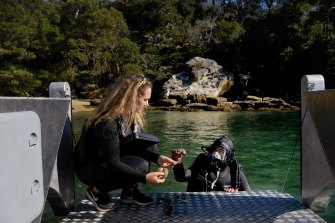 Nathalie Simmonds (left), head of marine science at The Abyss Project, examines dead invertebrates with project co-founder Carl Fallon near an inshore Sydney Reef. They immediately returned them to where they had been located.
