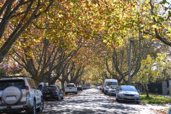 Established trees in Belson Street, Malvern East.