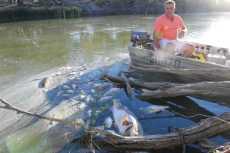 Graeme McCrabb on his tinnie in the Darling River, floating among dead Murray cod and other fish just after the second of three big fish kill events near Menindee in January 2019.