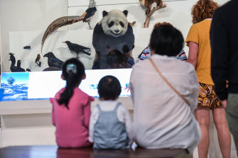 A panda is among the taxidermied animals in the museum's long-running  exhibition.