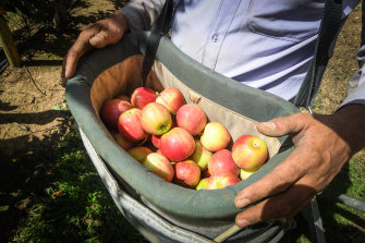 A fruit picker shortages is set to send fresh produce prices soaring in coming months.