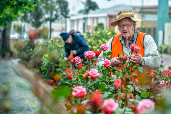 Everything's coming up roses: Carl Ellefsen (front) and Ian Spriggs moved to Morwell for its sprawling rose garden.