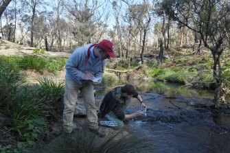 Western Sydney University scientist Ian Wright and student Callum Fleming take samples from Teatree Hollow as it meets the Bargo River. The creek is used as a water release point from Tahmoor Colliery.