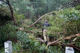 At least one person was trapped when the tree came down after a night of heavy rain.