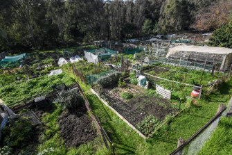 The Collingwood Community Gardens.