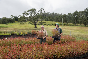 Mark Wilson, nursery manager with Patrick Medley, chairman of the Foundation for National Parks and Wildlife at the Friends of the Koala tree nursery.