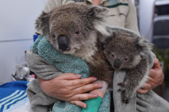 More than 4400 animal species were affected by the Victorian bushfires.