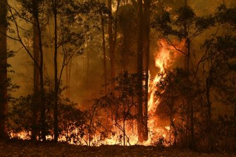 The natural oils in gum leaves make them highly combustible, which is incredibly dangerous during fire season.