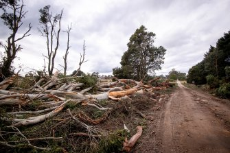 The aftermath on Pearsons Road, Trentham.