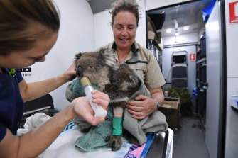 Ellen Richmond and Dr Meg Curnick of Zoos Victoria care for injured koalas Tippy and Jellybean in their mobile vet station.