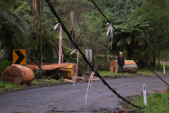 The storms did major damage to electricity infrastructure in the Dandenongs.