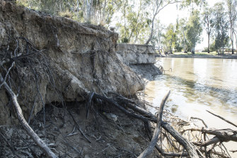 River bank erosion of the Murray River in the NSW Riverina.