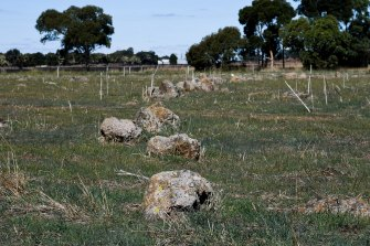 The Aboriginal stone arrangement that has not been removed.