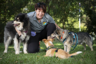 Researcher and dog trainer Melissa Starling with Kivi the Finnish lapphund (left), Kestral the Portuguese podengo and Erik the Tall, a Swedish vallhund.