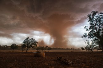 "Violent storms lifted dust along their gust fronts and occasionally caused ""gustnadoes"" near Forbes in western New South Wales."