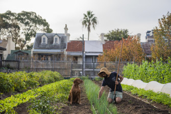 Tending the vegie garden at Camperdown Commons, Sydney.