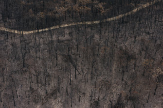 Burnt-out forest south of Moruya, on the NSW South Coast, from the 2019-20 bushfires.