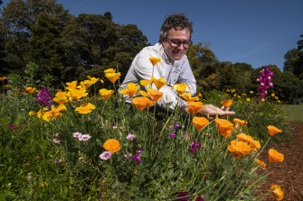 Curator-manager of the Royal Botanic Garden Sydney, David Laughlin among the California poppies in the wildflower meadow.