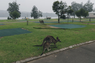 The empty Haven Holiday Park at Lake Conjola on Tuesday.