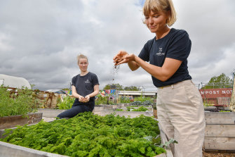 Reground founder Ninna Larsen and director Kaitlin Reid take coffee grounds collected at the Australian Open and add them to community gardens.