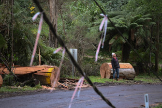 Alex Koehler, resident in The Cresent, Sassafras, looks at the storm damage on the road outside his home.