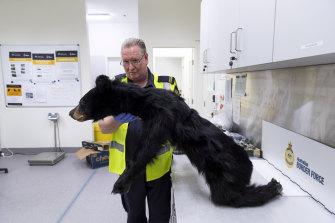 An Australian Border Force official holds up a bear they seized in September.