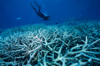 Coral bleaching of the Great Barrier Reef in 2016 was attributed at least partly to an El Nino.