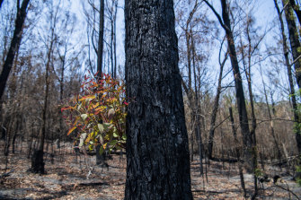 Bushfires in the Boyne State Forest. Last season's bushfires have added pressure on remaining native forest reserves.