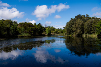The Mill Pond in Botany, near where Sydney Water periodically releases raw sewage.