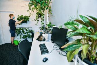 Plant technician Josh Gerraty says it's been 'eerie' watering plants in deserted office buildings.