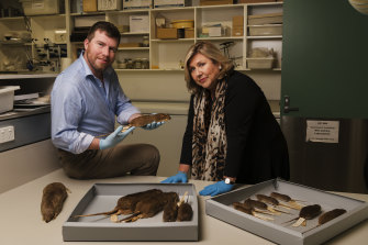 Australian Museum chief scientist Professor Kris Helgen and museum director Kim McKay with specimens from the US Typhus Commission research project.