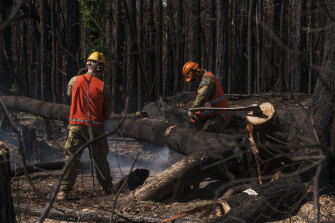 Australian Defence Force members assist in the clearing of trees that pose a threat in Lake Conjola.