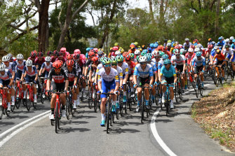 The peloton moves through the Adelaide Hills.