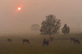 Smoke caused a red dawn at Port Macquarie, as fires burnt in the area.