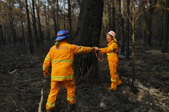 Port Macquarie residents joined staff from the RFS, the local council and the Koala Hospital to search for injured wildlife after recent fires.
