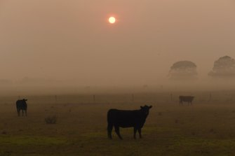 Smoke caused a red dawn in Port Macquarie on Thursday morning.