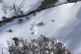 Skiier Drew Jolowicz carves up the powder snow at Mount Hotham on Sunday.
